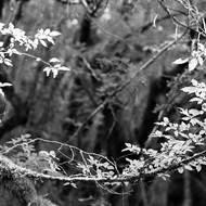 Haïku - Conversations autour du paysage